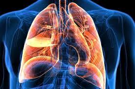 Ciğerlerde Gerekli Ayarlamalar